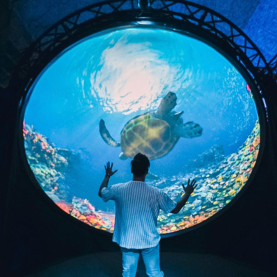 Man stands in front of the creative technology artwork Into the Blue showing a turtle swimming through a digitally rendered coral reef.